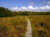 Ścieżka przyrodnicza Spławy – Polesie