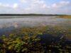 Jezioro Łukie – Polesie