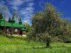 Cerkiew w Szczawnem – Bieszczady